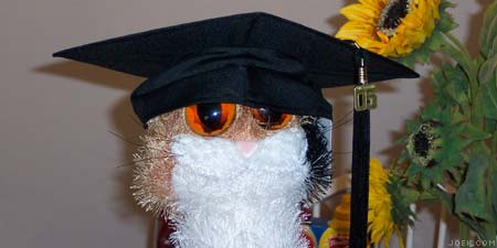 Freaky cat in my graduation cap.